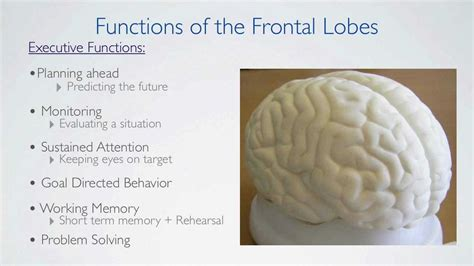 Detox The Cortex by Frontal Lobes Functions