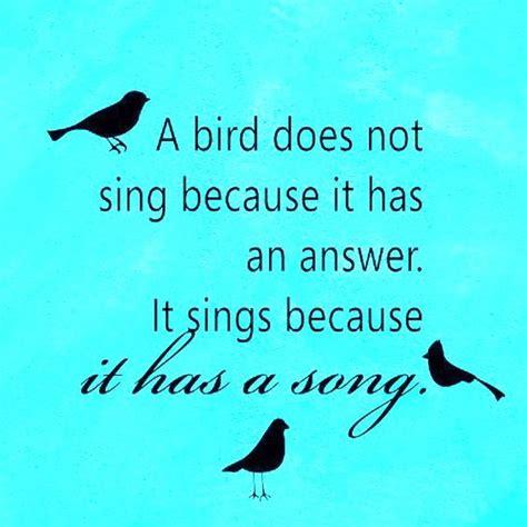 songs birds and love birds on pinterest