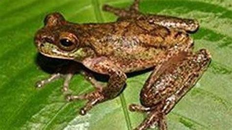 imagenes de animales que respiran por la piel quereraprender clasificacion animales vertebrados