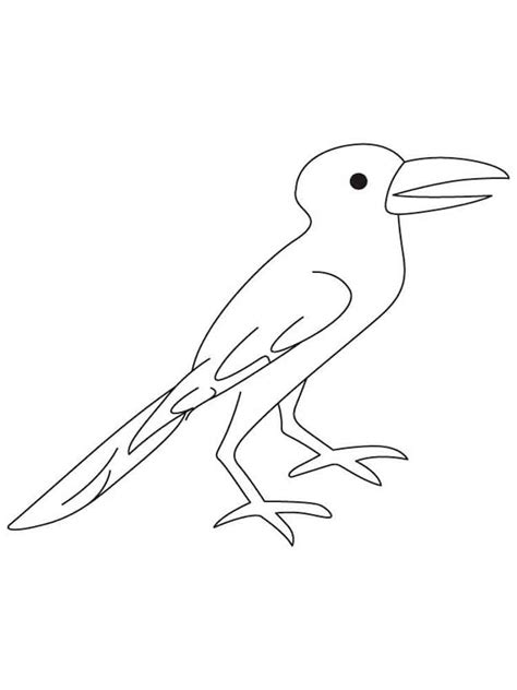crow bird coloring page crows coloring pages download and print crows coloring pages