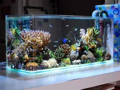 Aquascape Fish Aquarium Einrichtung Sorgt F 252 R Das Wohlf 252 Hlen Der
