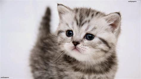 imagenes tiernas gatos imagenes tiernas de perros y gatos felinos fondos de