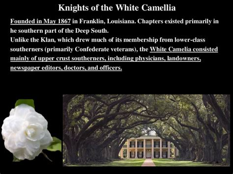 30white Camelia s history southern reconstruction