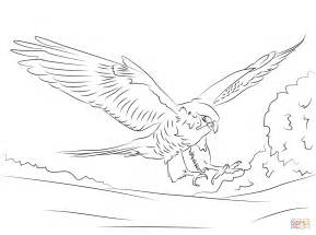 Peregrine Falcon Coloring Page  Free Printable Pages sketch template