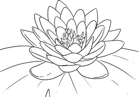 Printable Pictures Of Lotus Flowers | lotus flower coloring page az coloring pages