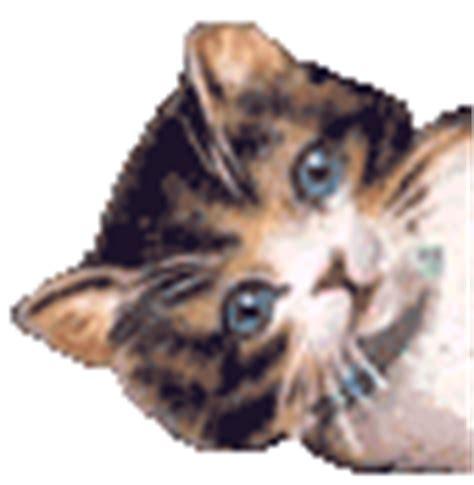 la cesta dei gatti