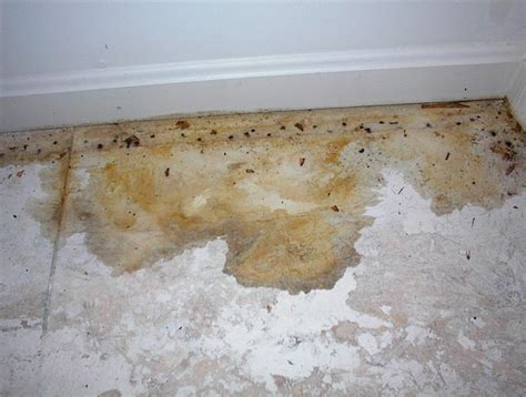 urine on rug pet urine stain cleaning and odor removal
