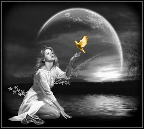el que et dir bonsoir la nuit belle image f 233 233 rie 167 doux r 234 ves image