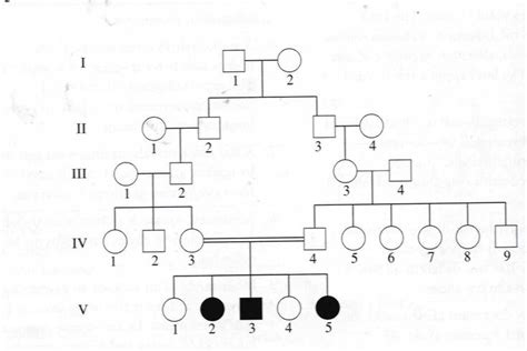 genetic family tree template google search