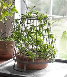 indoor vine plants most unusual indoor plants furnish burnish