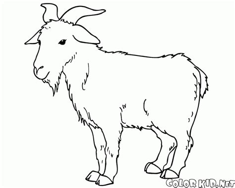 coloring pages of goat coloring page alert goat
