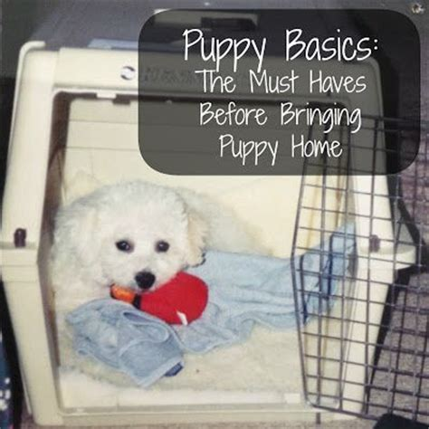 bringing a puppy home checklist puppy basics the must checklist before bringing puppy home information