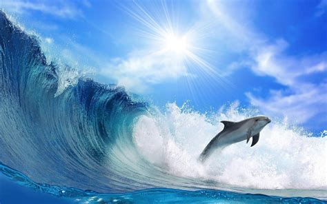 beatiful wallpaper beautiful wallpaper of a dolphin and a big wave hd animals