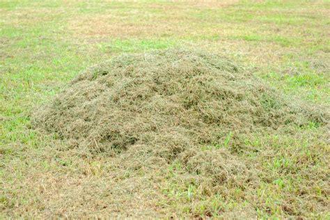 Gras Mulchen by Rasen M 228 Hen Oder Rasen Mulchen Was Ist Besser Plantura