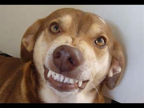 cachorro da risada ao ver  talco antipulgas youtube