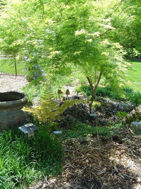 The Garden The Bare S Garden
