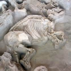 ashfall fossil beds ashfall fossil beds is one of nebraska s best historical sites