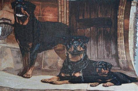 rottweiler rescue wi the 25 best rottweiler rescue ideas on rottweiler rottweilers and