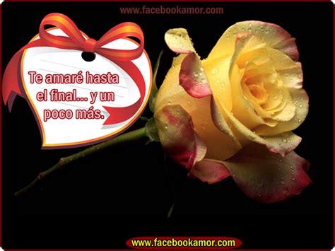 imagenes de flores bonitas para facebook flores rosas para facebook imagenes bonitas pelautscom