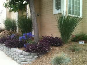 low maintenance landscaping plants naples ca low water low maintenance with space between