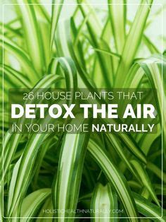 Detox Your Home Sustainability by A Well Jars And Will On