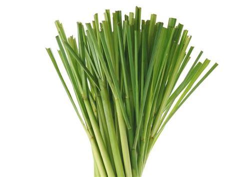9 Wonderful Lemongrass Tea Benefits | Organic Facts Lemongrass Benefits Cancer