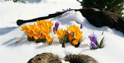 piante bellissime da giardino 4 bellissime piante da giardino resistenti al freddo e