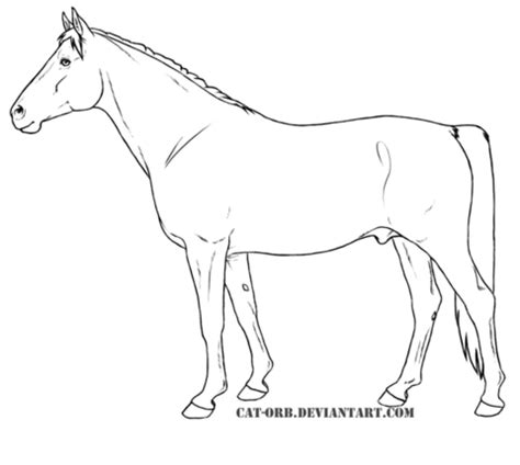 Shagya Arabian Coloring Page Super Coloring Arabian Coloring Pages