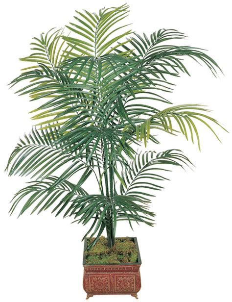 top  feng shui plants