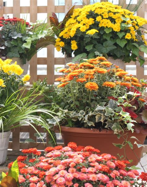 Fall Gardening Ideas Fall Planters And Gardening Tips Bright Bold And Beautiful