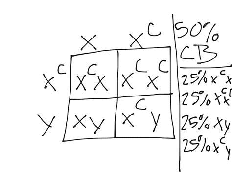 color blindness punnett square punnett square color blind science showme