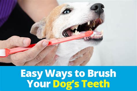 how often should you brush your dogs teeth easy ways to brush your s teeth oxyfresh