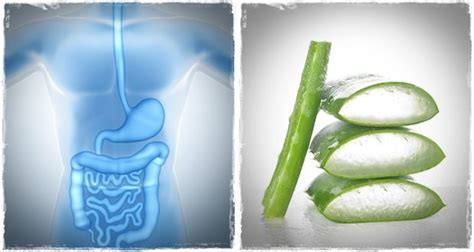 Aloe Vera Detox Side Effects by 16 Positive And Side Effects Of Aloe Vera Juice On The