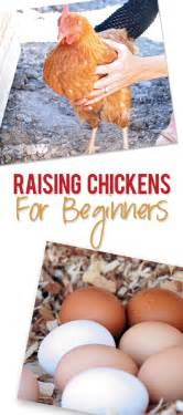 Backyard Chickens For Beginners How To Raise Chickens For Beginners