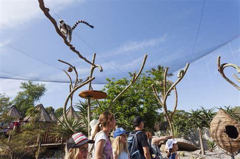 zoo designboom gallery of lemur exhibit snowdon architects 4