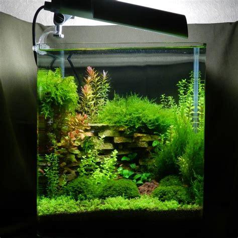 Aquascape Freshwater Aquarium Nano Cube Contest 2013 Cube Aquascape Ideas Pinterest