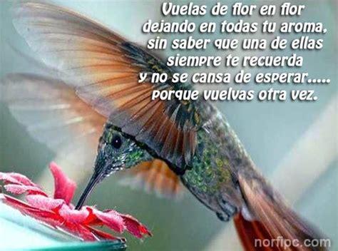 versos cortos de aves vuelas de flor en flor madala pinterest picaflores