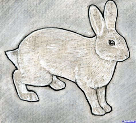 how to a rabbit how to sketch a rabbit step by step forest animals animals free drawing