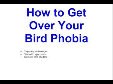 how to get over your bird phobia youtube