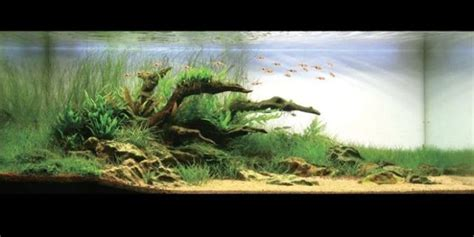 cool aquascapes cool aquariums 23 photos izismile com