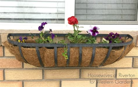 soil for window boxes best plants for window boxes western garden centers