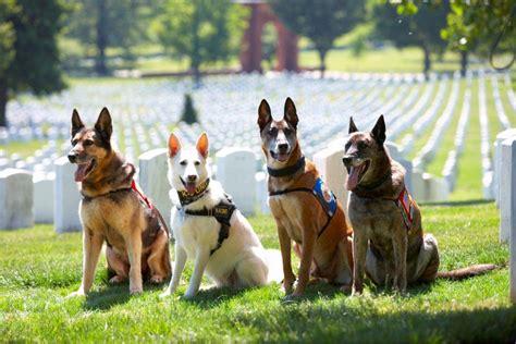 usa service dogs us war association national headquarters us war association national