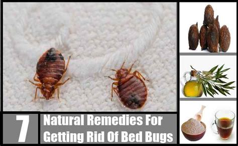 home remedy to get rid of bed bugs how do you get bed bugs in your house natural home