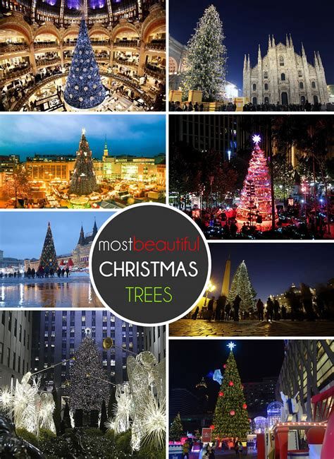 the 20 most beautiful christmas trees in the world2014
