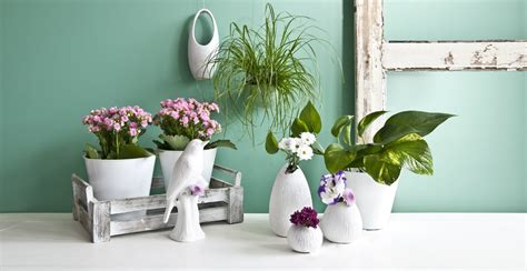 fiori in vaso da interno vasi alti eleganti recipienti per i vostri fiori dalani
