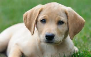 Dogs Small Dog Disease American Dogs