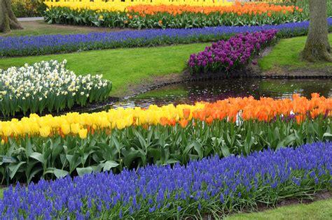 Colorful Flower Garden Free Stock Photo Public Domain Colorful Flower Gardens