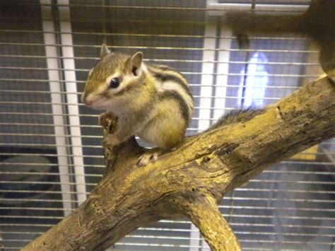 gabbia per scoiattoli giapponesi autofficine a roma the knownledge