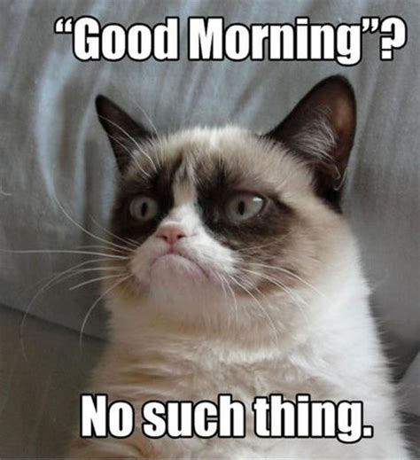 The Grumpy Cat Memes - grumpy cat good morning no such thing internet trash
