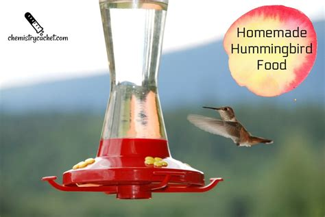 easy homemade hummingbird food recipe plus important tips